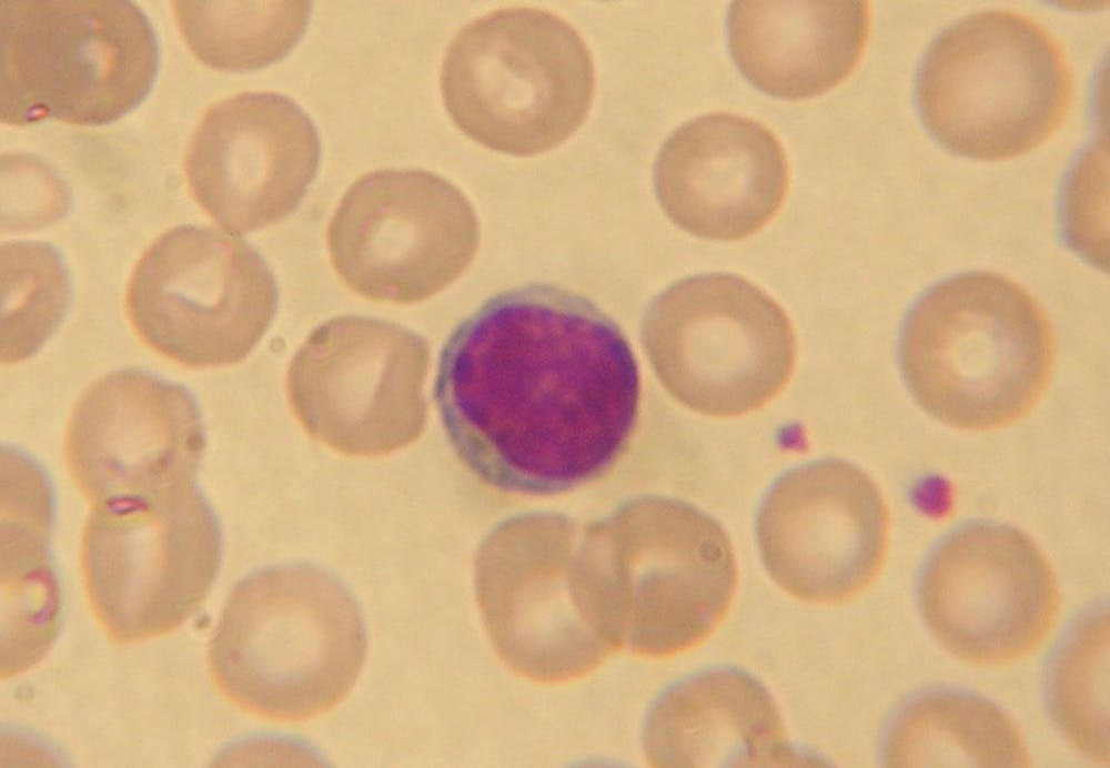 B9_Lymphocyte