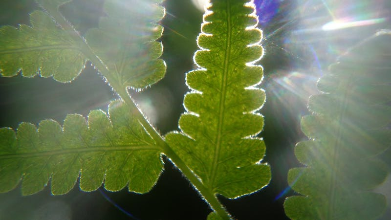 PUBLIC DOMAIN Professor Ayzner aims to mimic light-harvesting organelles found in plants.