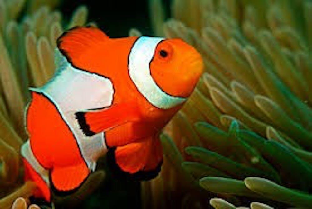 b8-fish