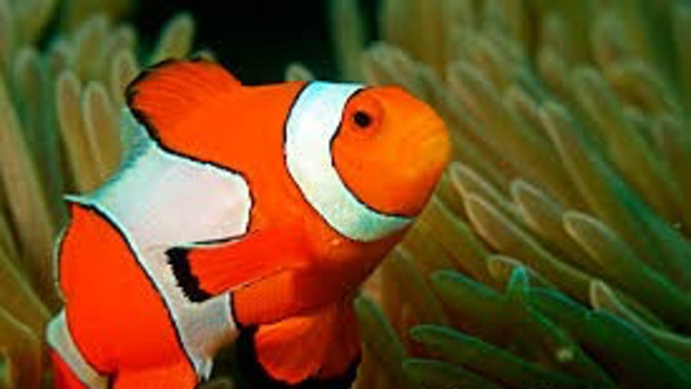 PUBLIC DOMAIN Researchers found that certain species of fish can recognize themselves in mirror images.