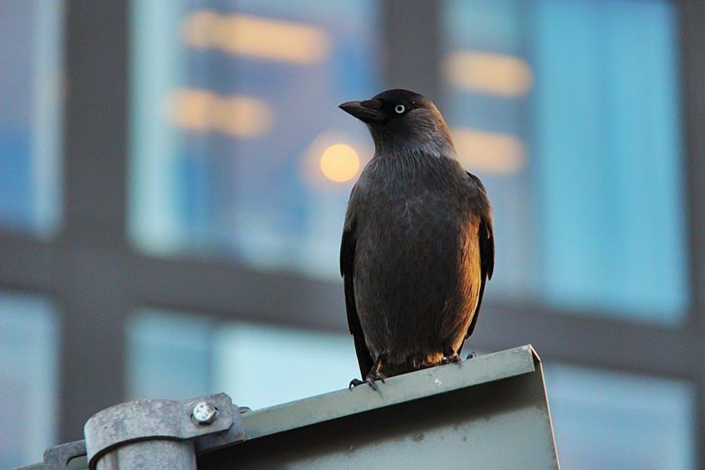 B8_Bird-1024x683