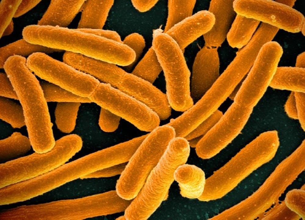B8_bacteria