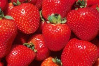 Public domain Strawberries are one kind of spring ingredient to look forward to as they come into season.