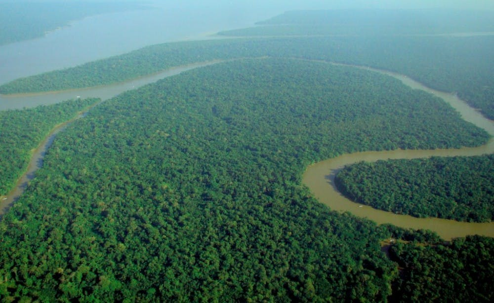 B7_Rainforest-1024x629