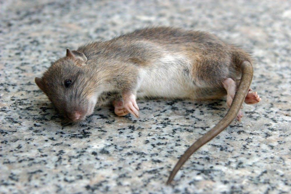 B8_mice