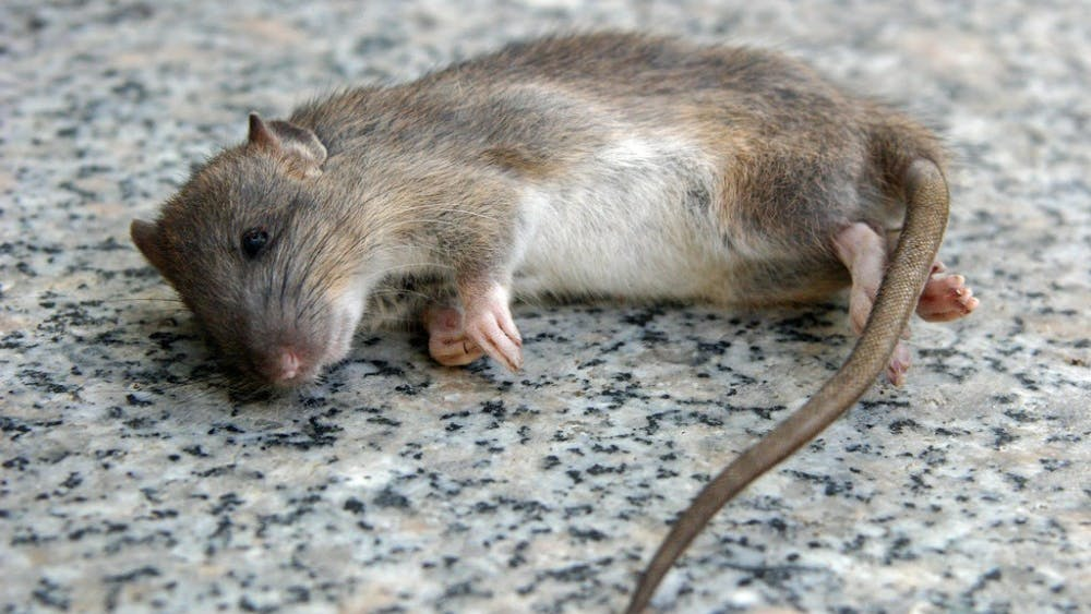 PUBLIC DOMAIN  An electrophphoretic neural implant used in mice can control epilepsy.