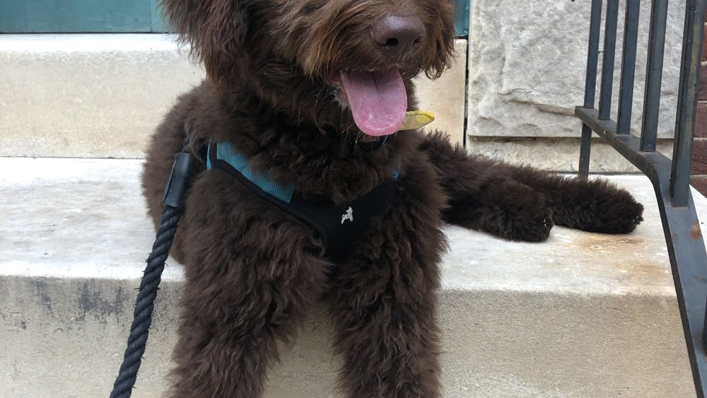 COURTESY OF LAURA WADSTEN Wadsten has found an outlet for self care in walking her furry friend Stella.