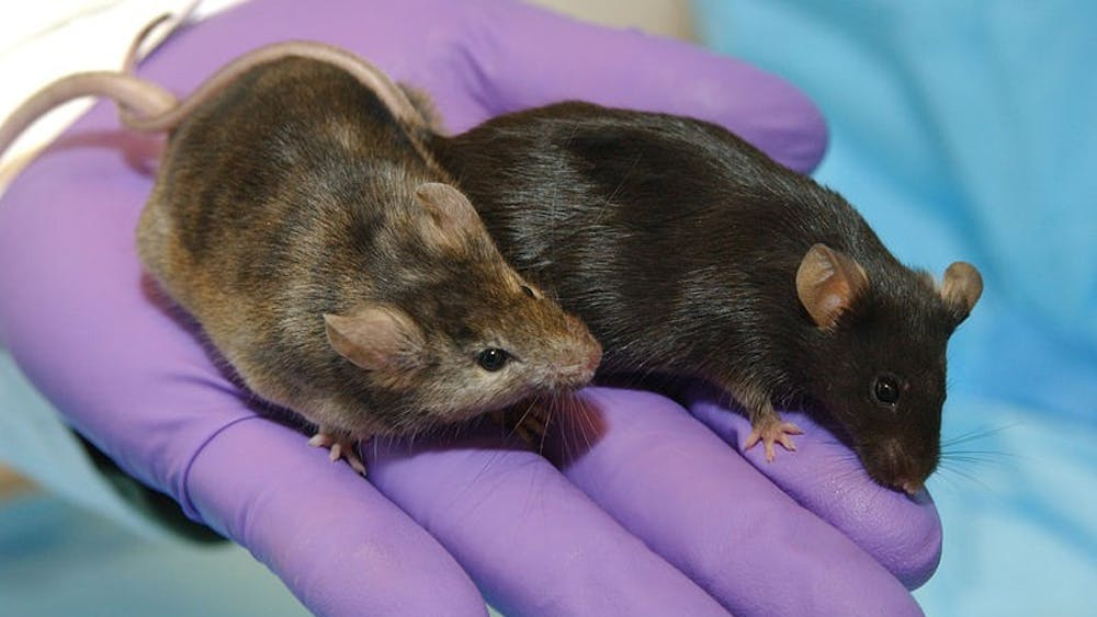 PUBLIC DOMAIN The study can be applied to human health as mice age similarly to humans.