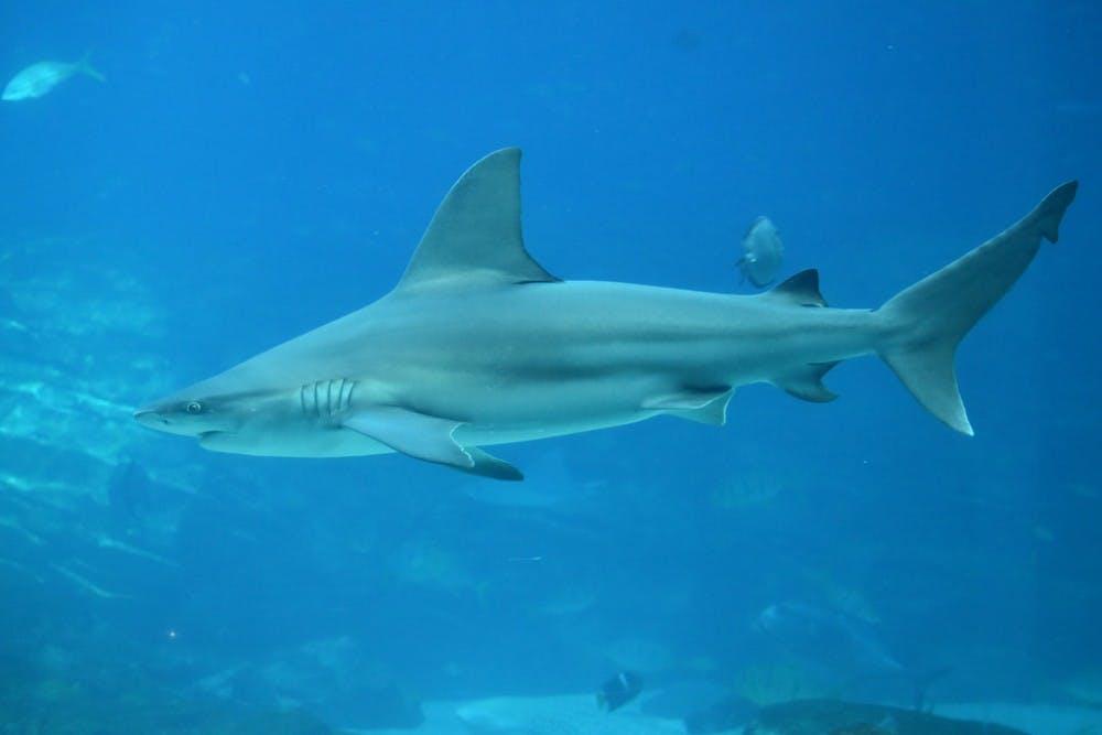 b9-sharks