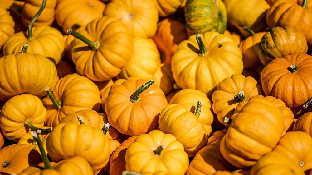 KORONA LACASSE / CC BY 2.0 Grab mini pumpkins at Druid Hill on Saturday night.