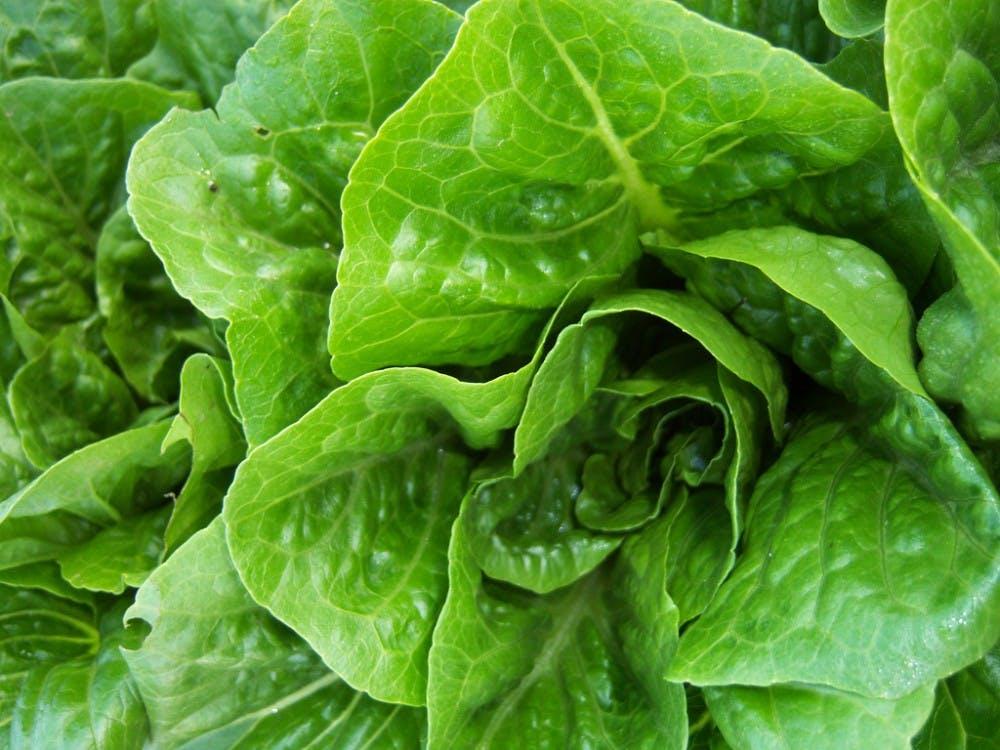 b7-lettuce