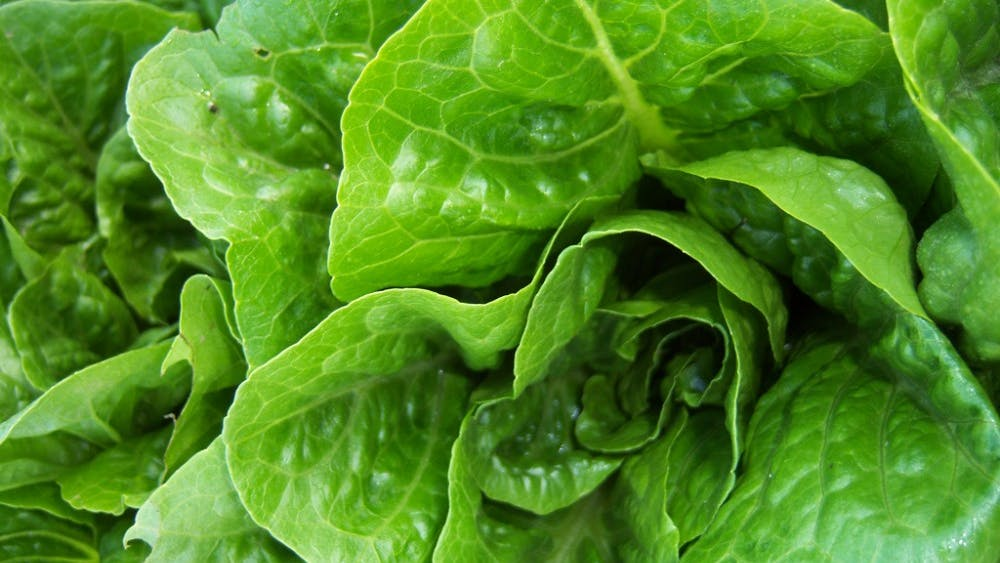 PUBLIC DOMAIN A recent outbreak of the harmful bacteria E. coli has been associated with romaine lettuce.