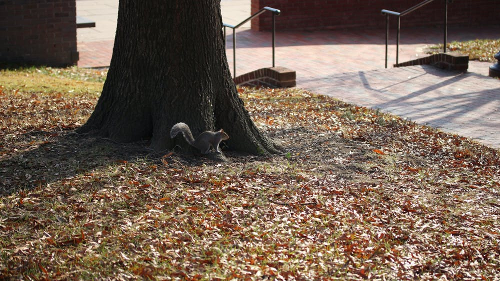 FILE PHOTO Tan reminisces on her adventures around the Homewood campus last year.