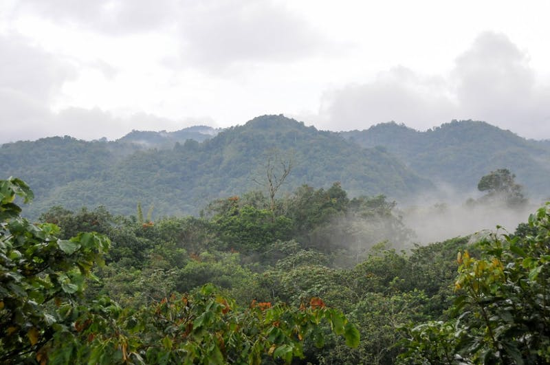 John Leszczynski/ CC BY-SA 2.0 Deforestation in cloud forests is causing birds to migrate to higher altitudes.