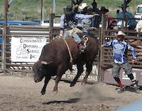 PUBLIC DOMAIN Rodeos are an exciting blend of masculinity and muscle.