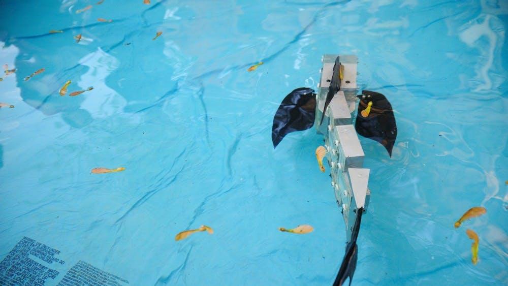 PUBLIC DOMAIN The newly engineered Soft Robitic Fish (SoFi) has many motor advances.