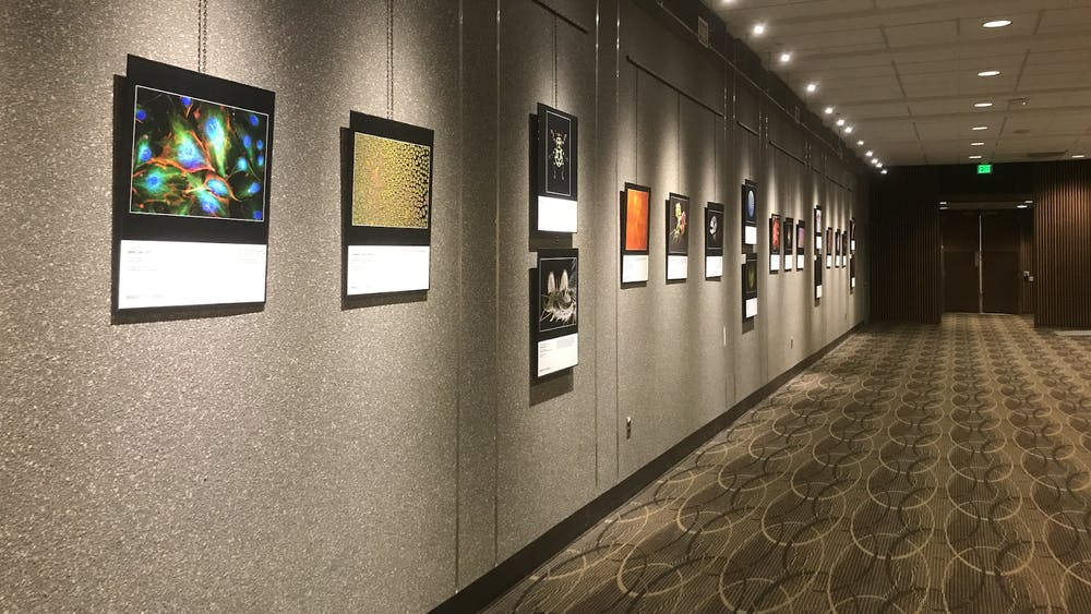 COURTESY OF AMRITA BALRAM Images from Science 3 is on view at the Hopkins medical campus from now until March 20.