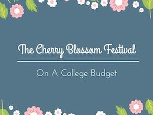 The-Cherry-Blossom-Festival
