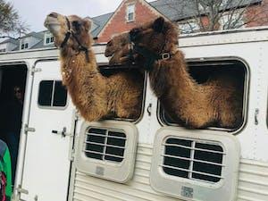 Camel_ONLINE