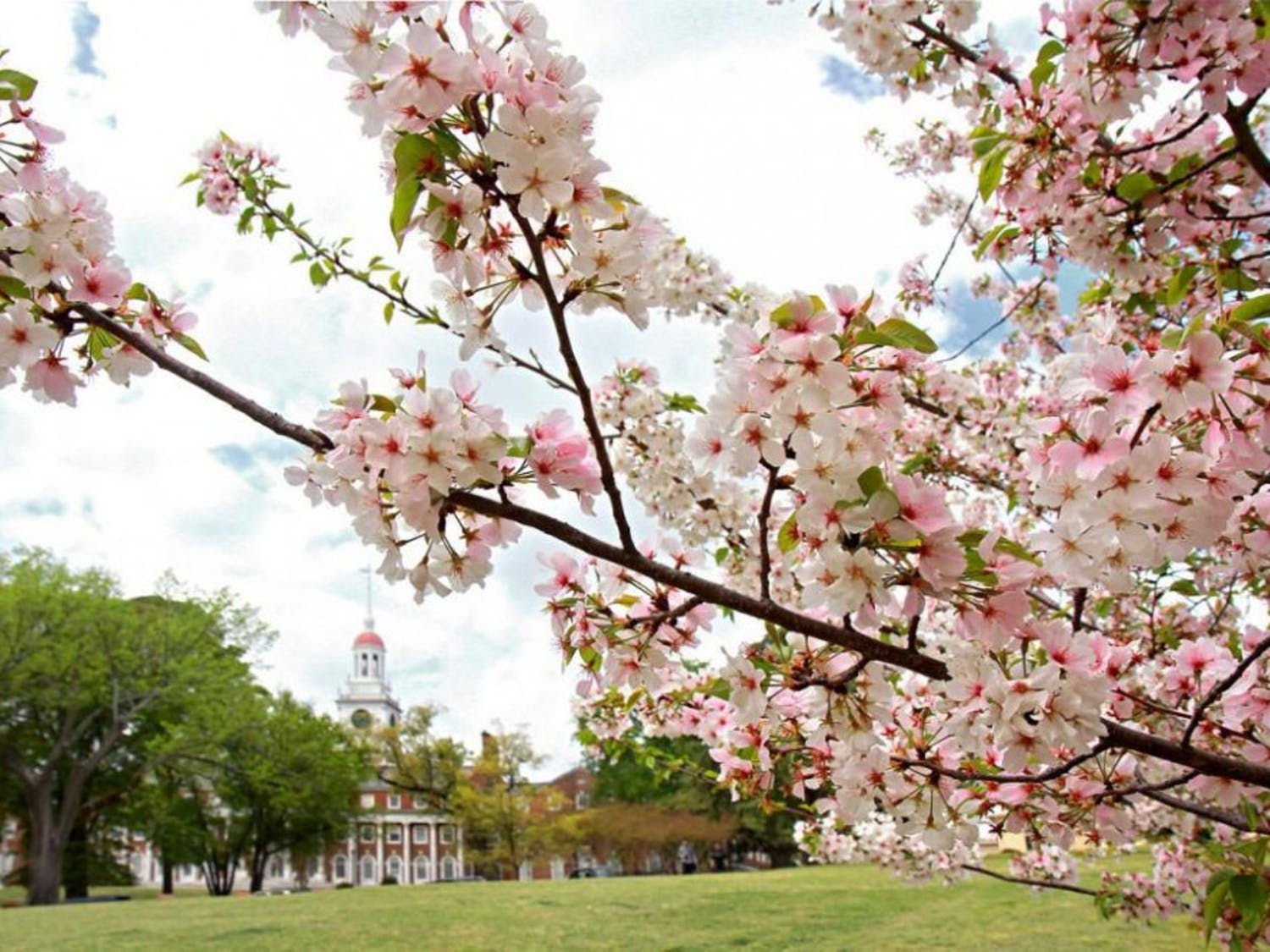 law-school-with-cherry-blossoms-X2