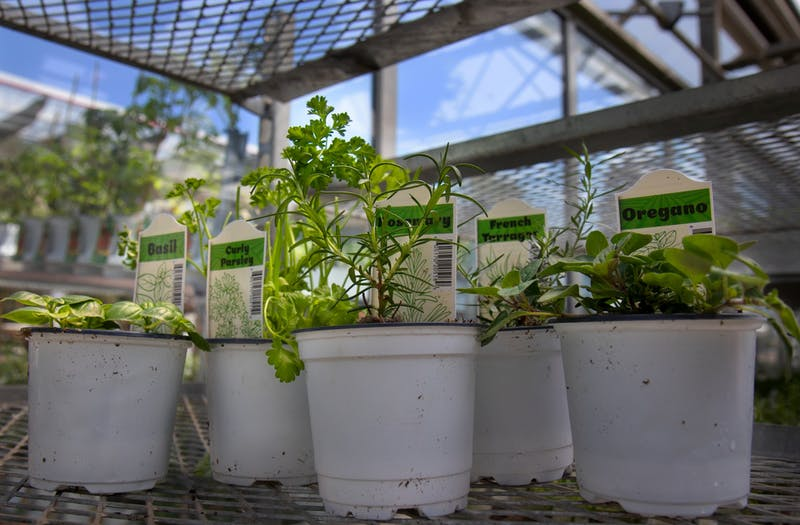 A selection of herbs at Gertens greenhouse and nursery in Inver Grove Heights on Sunday, May 1. Herbs are a forgiving option for first time gardeners.
