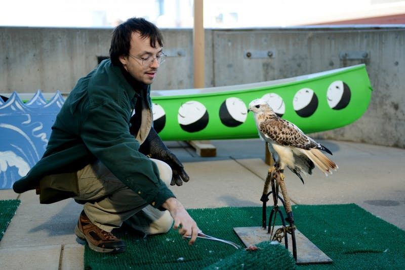 Dan Hnilicka of the University of Minnesota's Raptor Center gives a treat to Casper the Red-tailed Hawk outside of the Weisman Art Museum on Tuesday. Raptor Center staff answered questions about birds and allowed students to observe and take photos as a part of the University of Minnesota's Nature Heals: 30x30 program.