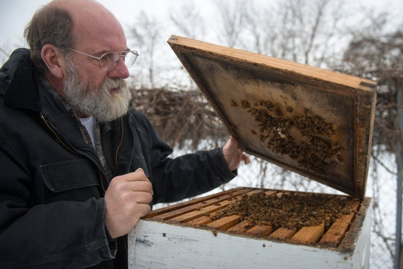 Gary Reuter of the University of Minnesota's Bee Lab looks inside of a box where bees are kept on the St. Paul Campus on Tuesday. Recent research shows that common pesticides found on plants and trees that bees feed off of are entering their nectar and harming bee populations.