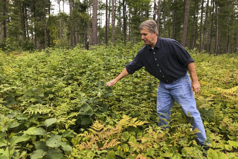 Brian Palik, site lead for the Cutfoot Experimental Forest, points out different types of trees at the Cutfoot Experimental Forest on Saturday, Sept. 7.