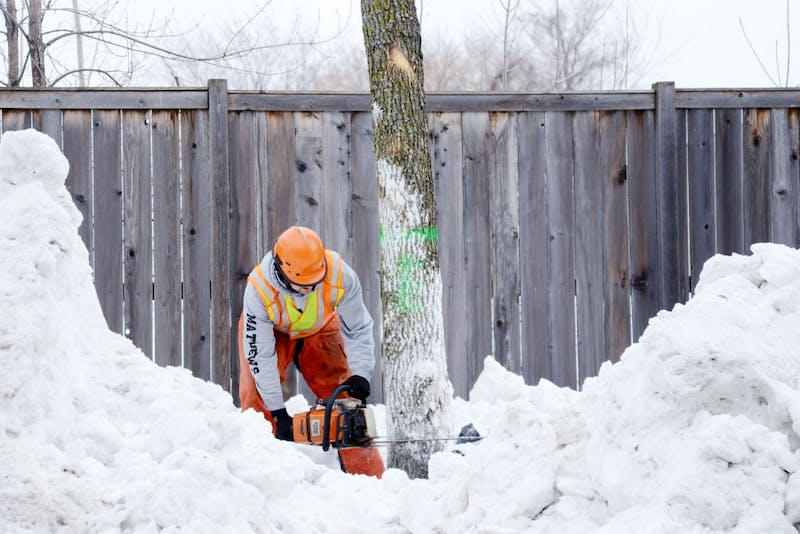 Minneapolis Park Board worker cuts down an Emerald Ash Borer infested tree in the SE Como neighborhood on March 10, 2014.