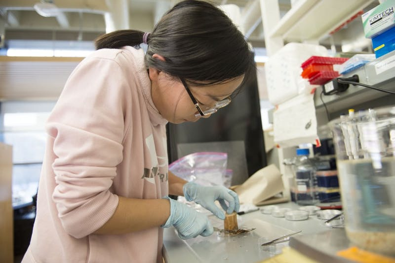Yanmei Zhang, a post doctoral student in plant and microbial biology, calculates wood density and volume measurement at the Cargill Building on Monday, Dec. 10 in Saint Paul.
