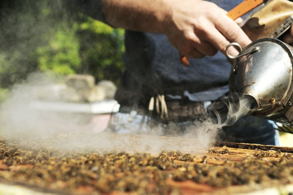 U researchers hope to revitalize the honey bee
