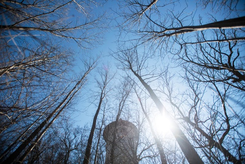 A grove of trees sit in Propsect Park on Monday. According to a new university study, trees can adapt to climate change by shifting their metabolism.
