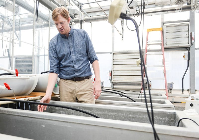 College of Veterinary Medicine assistant professor Nicholas Phelps explains the aquaponic farm which is in a greenhouse in St. Paul on Friday.  Phelps is also one of the project's researchers.