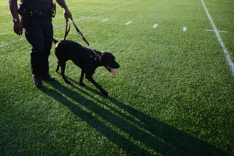 Officer Cunningham and police dog Gator walk the field of TCF Bank Stadium on June 1. Gator is a specialized bomb dog trained to search for bombs before campus events.