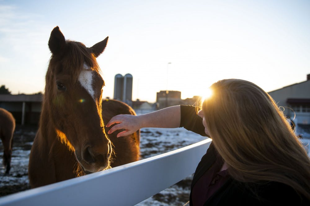 Dr. Krishona Martinson interacts with a horse that lives at the Leatherdale Equine Center near the St. Paul campus on Monday, Feb. 24.