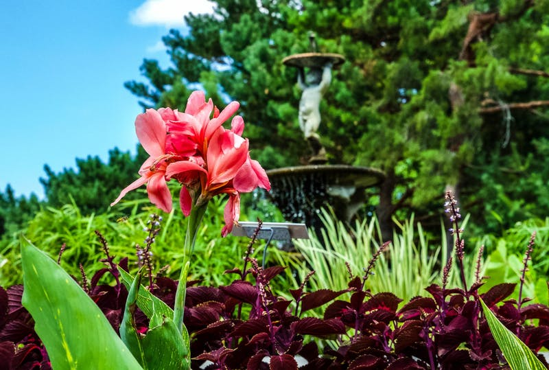 Flowers in the Annual Garden surround a small pond with a fountain statue at the Minnesota Landscape Arboretum in Chaska on Monday, July 13.