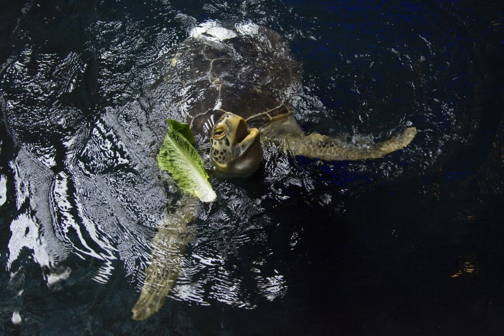 A shell upgrade for Seemore the sea turtle