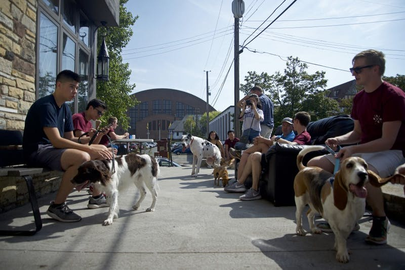 Dogs roam around Phi Sigma Kappa as they hold there second annual fundraising event for the Special Olympics on Sunday, Sept. 24.