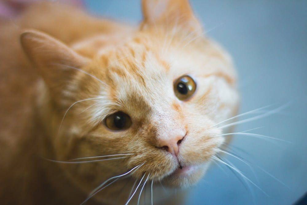How Pumpkin went from ordinary cat to Athens celebrity