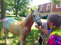 Emma, a horse dyed rainbow colors, made a surprise appearance at Athens Pride Fest 2017.