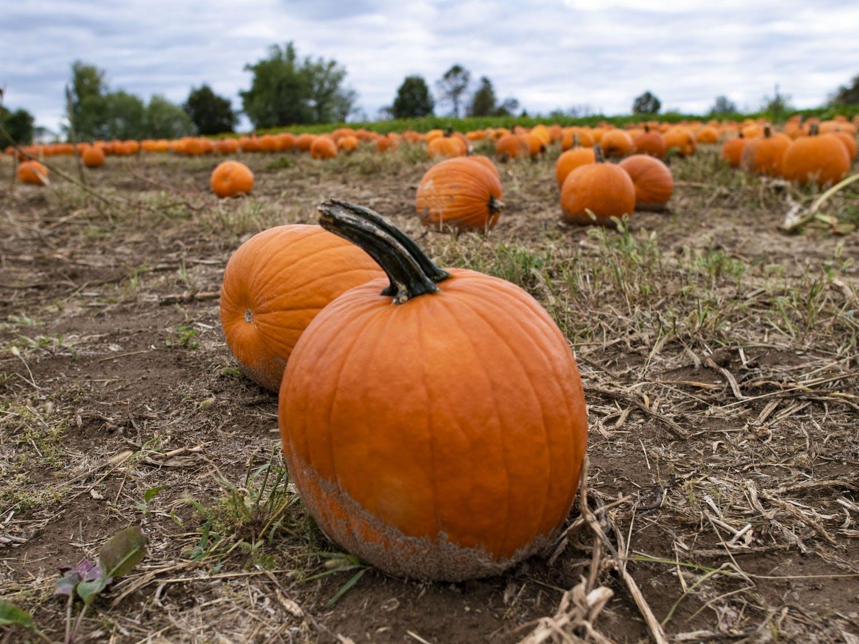 Athens Pumpkins 01.jpg