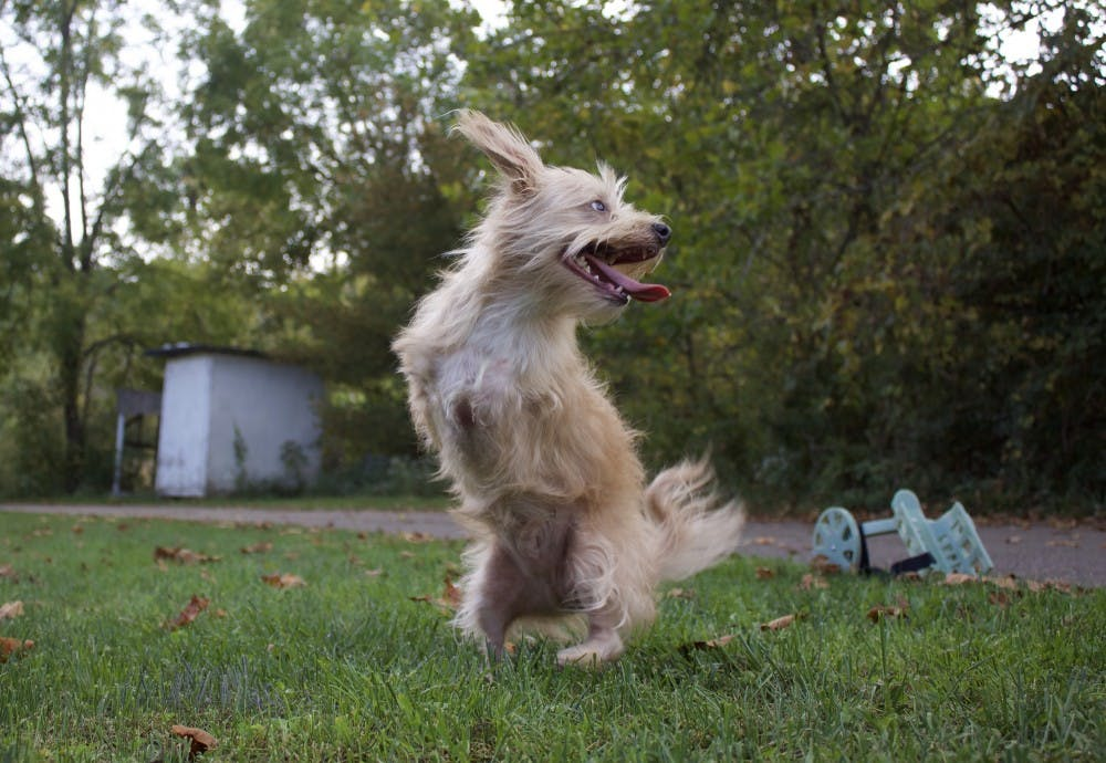 Where is Tumbles, the two-legged dog, now?