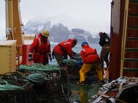 Pushing fishing pots off the stern of the ARSV Laurence M. Gould in Dallmann Bay, Antarctica. (provided via Lisa Crockett)