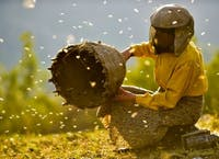 "Beekeeper from the Spring Sustainability Series movie ""Honeyland."" (Provided via Alex Kamody.)"