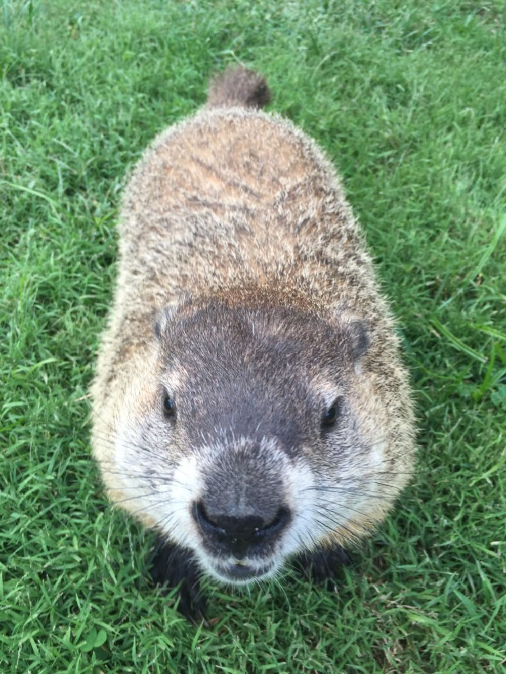 Here's how you can feed the groundhogs without harming them