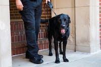 Ohio University Police Department K9 officer Alex with his handler Tim Woodyard.