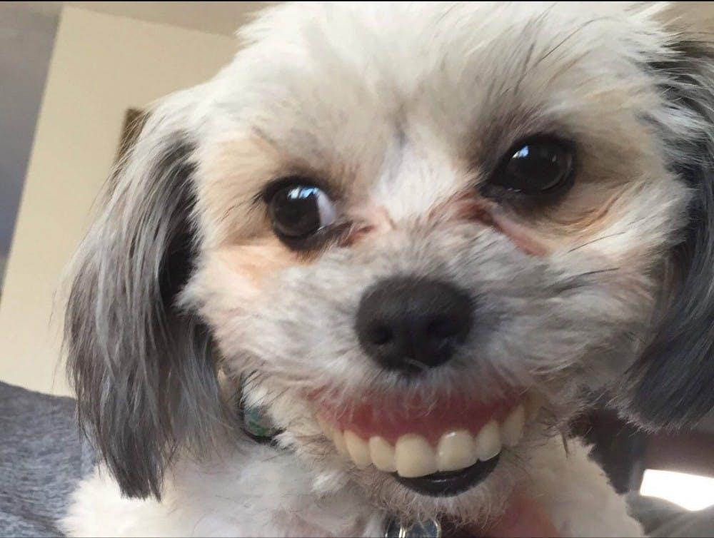 Fun News Friday: World's oldest doodle discovered; dog steals dentures