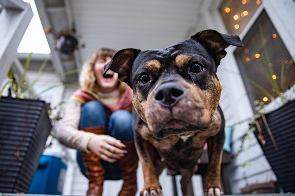 Pets provide owners with emotional support during pandemic
