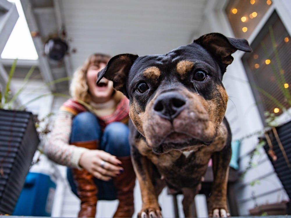 Ohio University student Lauren McCain finds solace in the company of Fiona, a new companion McCain adopted in the early quarantine stages of the COVID-19 pandemic.