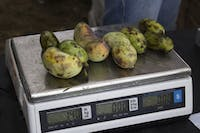 Pawpaws being weighed at the 18th Annual Ohio Pawpaw Festival in Albany on Sept. 18, 2016. (FILE)